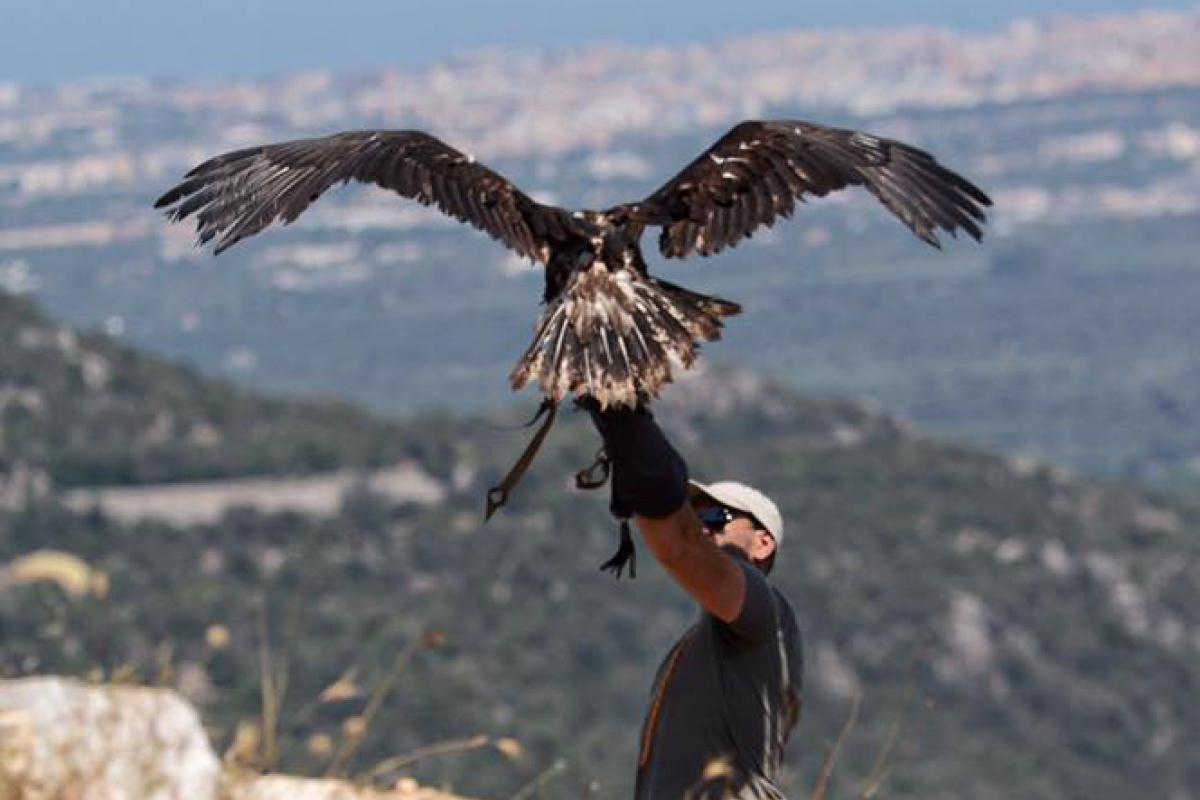 Falconeria ad Alberobello